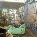 """Chyba jest tam gorąco bo zwierzaki śpią na """"betach"""" #Wiewiórki"""