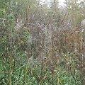 pajęczyny #jesień #pająki #pajęczyny