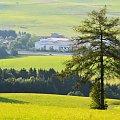 """""""Jedyny"""" Górna Austria, Lipiec 2011 #deszcz #drzewa #jezioro #kadr #makro #morze #przyroda"""