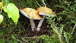 images47.fotosik.pl/1037/7d55cc49b789198em.jpg