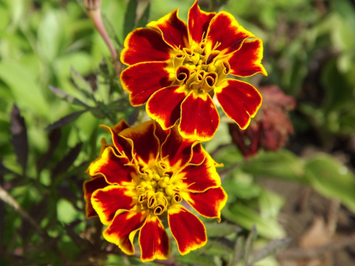 #kwiat #kwiaty