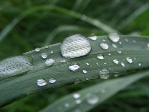 rosa na trawie #chrząszcz #owad #rosa #trawa