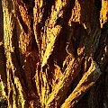 Kora #drzewa #kora #przyroda