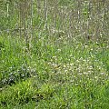 PZK - wiosna #wiosna #zielono #zielona