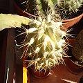 #kaktus #kolce #makro