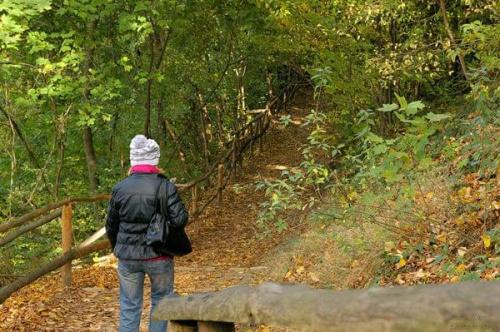 #Drzewa #Jesień #Kazimierz #Liście