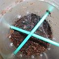 #bezkręgowce #pająk #Ptasznik #terrarium #terrarystyka #zwierzęta