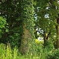 #park #drzewa #wspomnienia #natura #wiosna