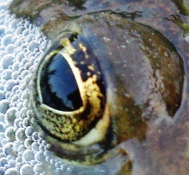 krajobraz żabie oko #żaba #płaz #krajobraz #natura