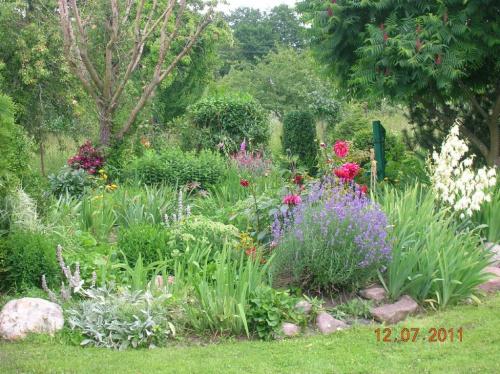 Zobacz Wątek Ogród Gosi Moje Miejsce Na Ziemi