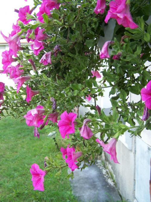 #kwiat #przyroda #roślina #jabłko