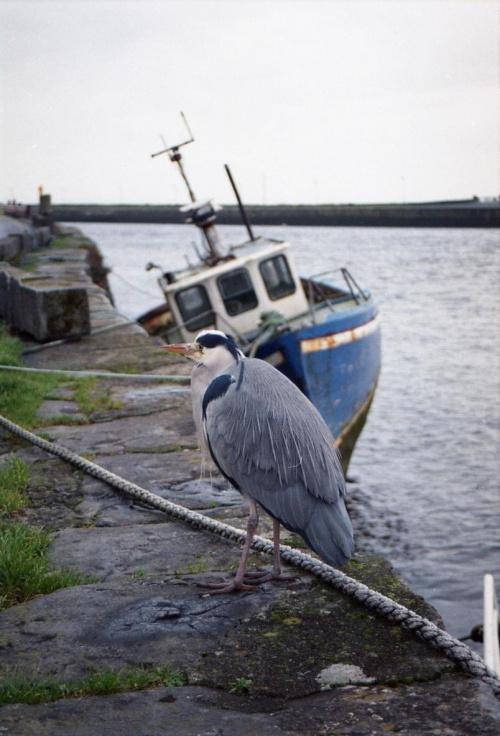 Old Port #Galway #Irlandia #Port #Ocean #Zatoka