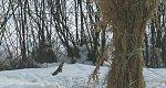 http://images47.fotosik.pl/1355/9c358d74f3f2dc4bm.jpg