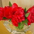 #Piwonie #przyroda #kwiaty #czerwień #wazon