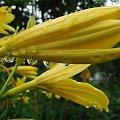 #jaba #jaba55 #rośliny #flora #piękne