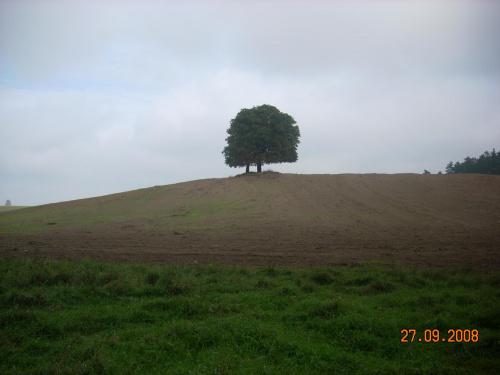 Pi�kny widok- pojedy�cze drzewo?