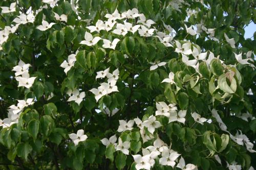 #drzewa #kwiaty