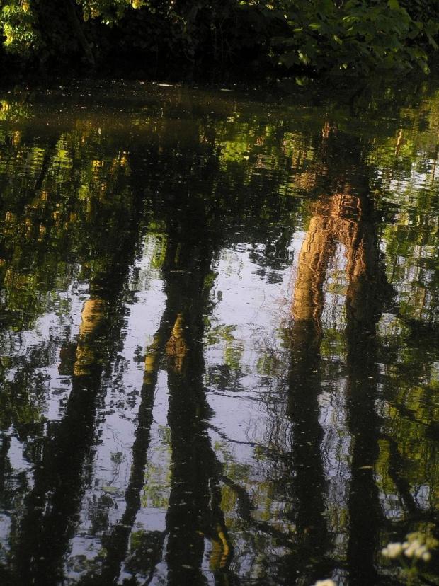 Nad rzeka Lea #Anglia #rzeka #Lea #widoki