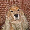 moja modelka - IX 2004 #Dudi #Dudinka #pies #psica