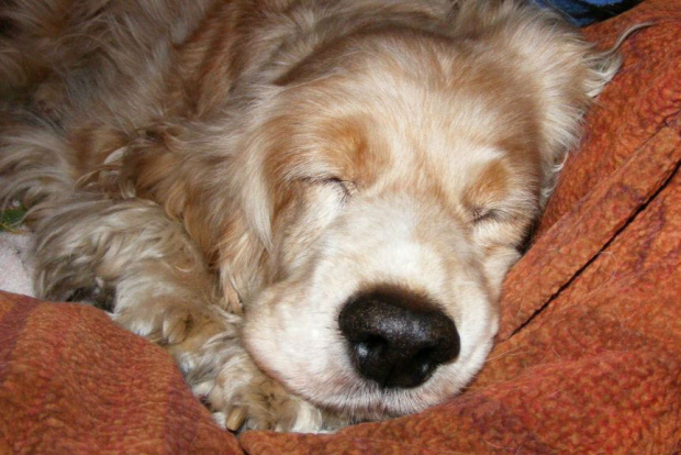 moje kochane Pysio #Dudi #Dudinka #pes #Psica #nos #nochal