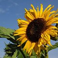 dla Darka (dari320) z okazji urodzin #kwiat #ogród #natura #kolor
