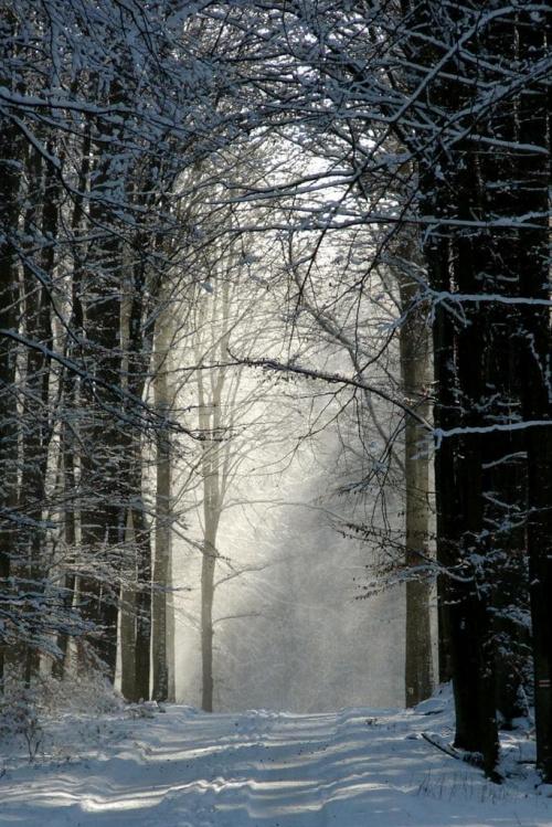 Zdjęcie konkursowe #zima #brama #słońce #las #śnieg #światło