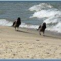 ...nie zawacaj mi głowy, tylko gadasz i gadasz! #ptaki #NadMorzem