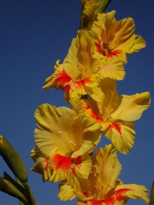 #kwiat #ogród #natura