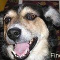 #Pies #uśmiech