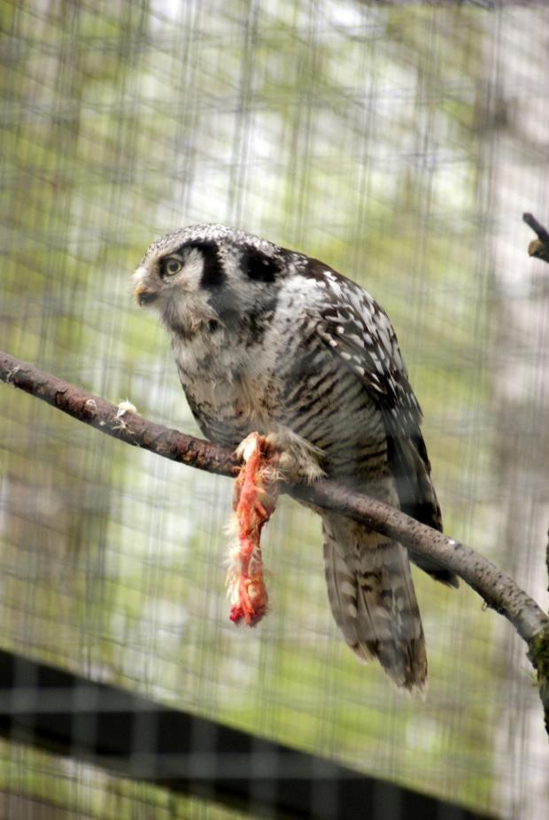 Czas obiadu #Borysewo #Łódź #ptaki #safari #zoo
