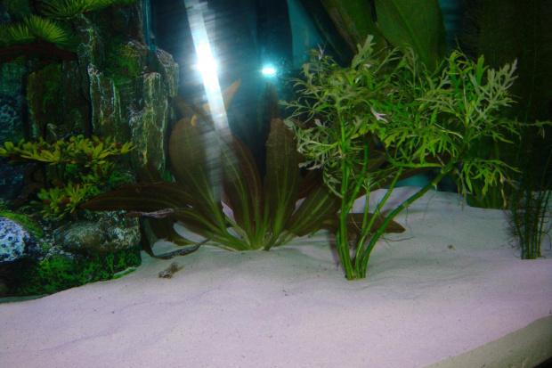 Akwarium ze zmienionym podlozem