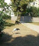 http://images47.fotosik.pl/199/4dc712f1e9d01e87m.jpg