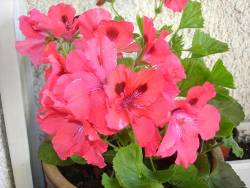 Kwiaty na moim balkonie