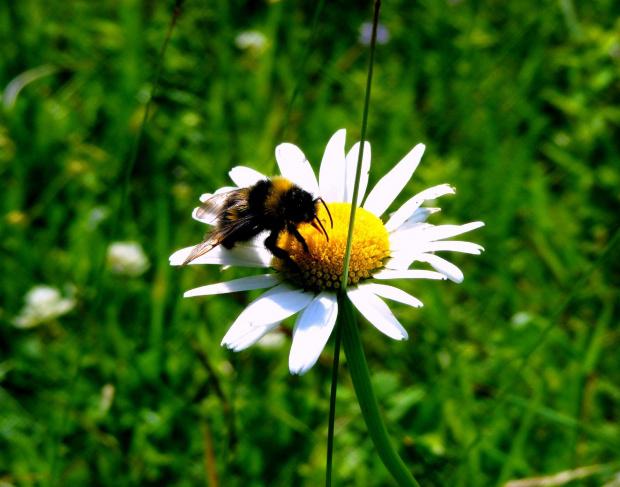 #pszczola #kwiat #laka