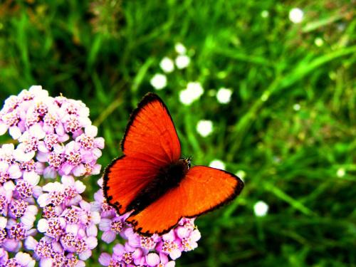 #motyl #laka #kwiaty #trawa #przyroda
