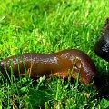 #natura #ślimak #trawa #zieleń #pies #makro