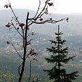 jarzębina #góry #Karkonosze #SzklarskaPoręba #Szrenica #widok #jarzębina