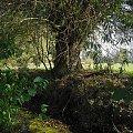 wierzba #drzewo #wierzba #woda #natura