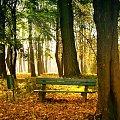 Park w Jaworze jesienią_1 #Jawor #krajobraz #przyroda #park #jesień #ławka