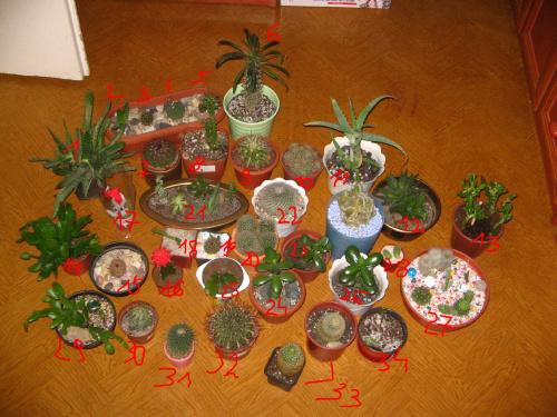 Kaktusy #kaktusy