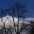 Miły poranek #Warszawa #poranek #drzewo #niebo #błękit