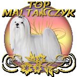 Top Maltańczyk!