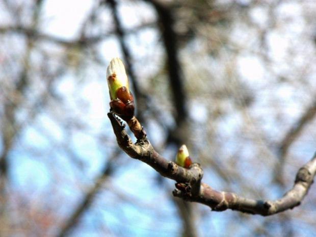Wiosennie. #gałąź #pąki #ZespółSzkółEkonomicznychRadom #Radom