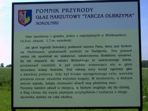 Sokolniki / Gniezno Opis pomnika przyrody Tarcza Olbrzymka