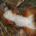 Drewni Wiewiór #poznań #morasko #żurawiniec #rezerwat #las #przyroda #wiewiórka #martwa