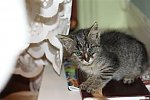 http://images47.fotosik.pl/346/dee045e3486d0113m.jpg