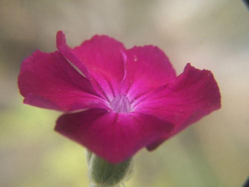 #kwiaty #las #ogród #ogródek #makro #ZBliska #kolorowe #czerwone #białe #fioletowe #liśćie