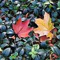 Jesień kolejna i nie ostatnia #Jesień #Warszawa #Śródmieście #Park