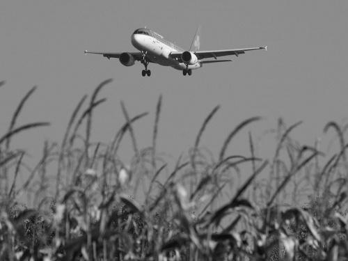 kukurydza #epkk #a320 #Balice