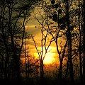 Zachód słońca w grudniu #ZachódSłońca #drzewa #grudzień